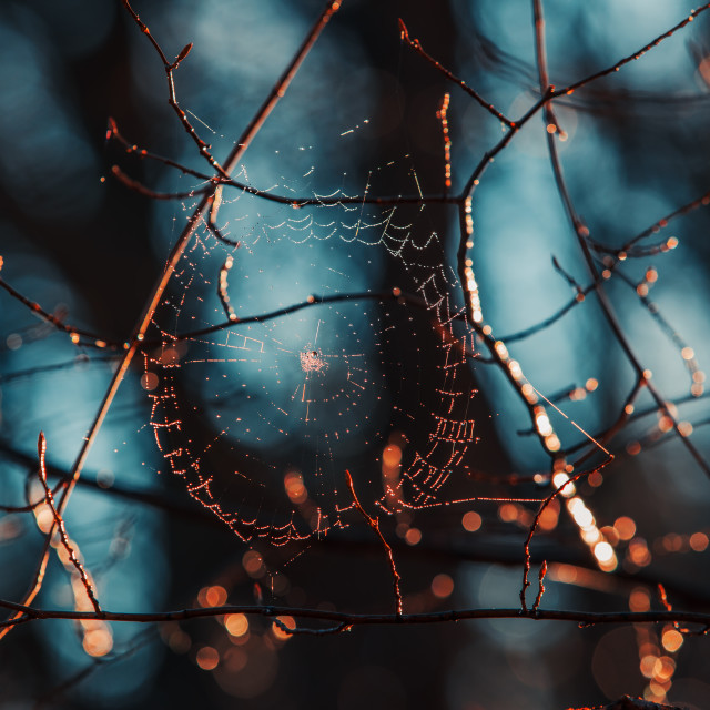 """""""Spiderweb with dewdrops on blue background"""" stock image"""