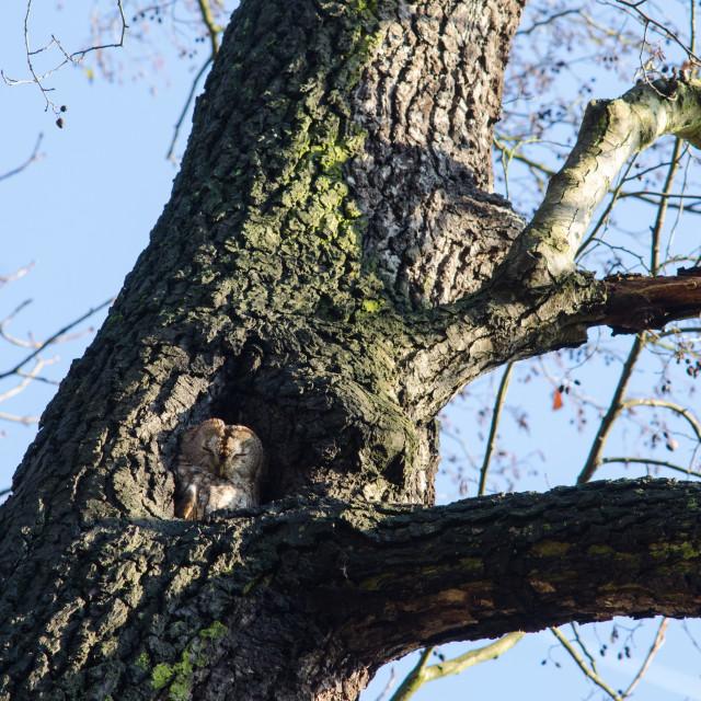 """Owl during daytime"" stock image"
