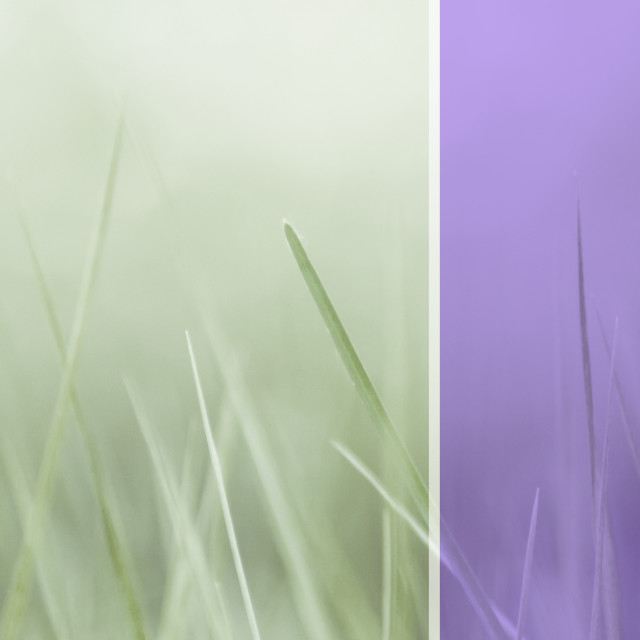 """abstract nature backdrops"" stock image"