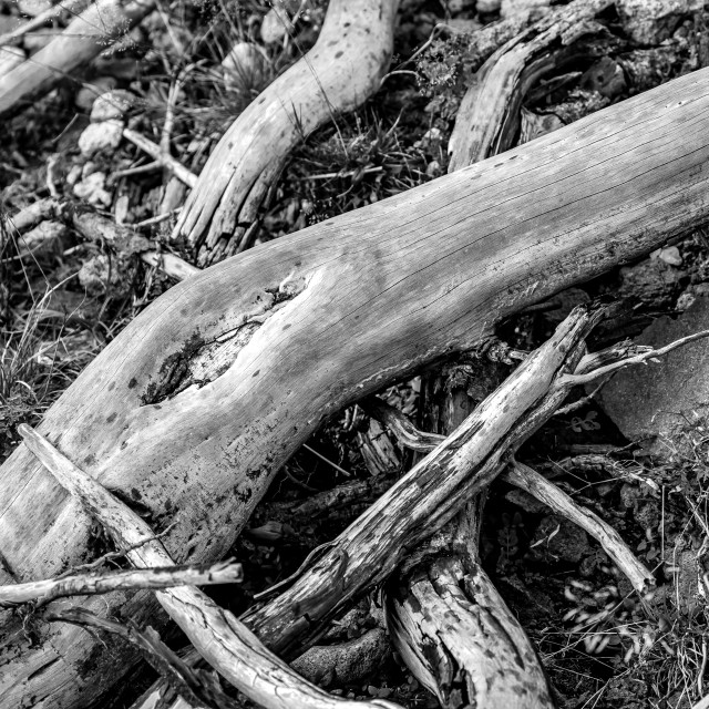 """Dead tree roots lying on rocks in black and white"" stock image"
