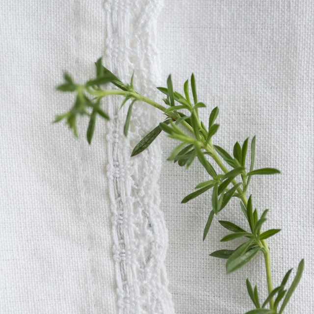 """""""Winter savory on table"""" stock image"""