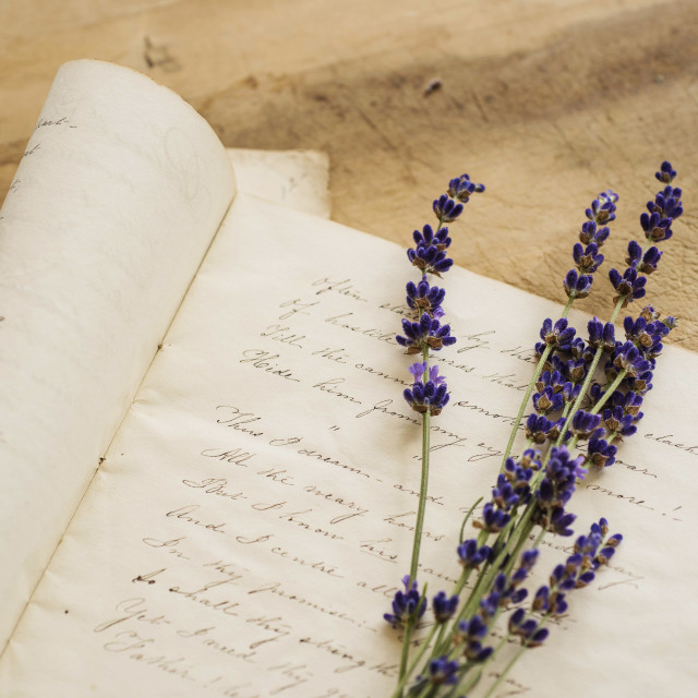 """Studio shot of lavender on antique handwriting"" stock image"