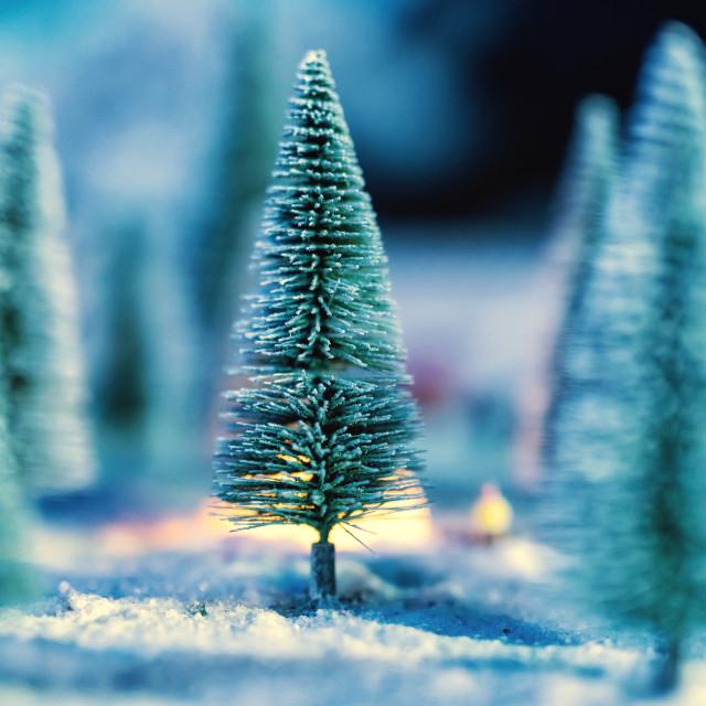 """miniature Christmas trees with snow"" stock image"