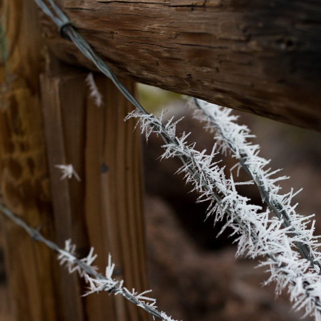 """Hoar Frost on Fence"" stock image"
