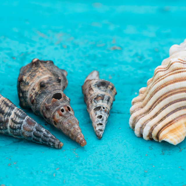 """She Sells Sea Shells"" stock image"