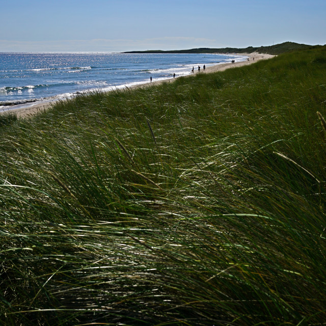 """Beadnell Bay, Northumberland"" stock image"