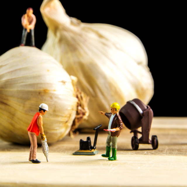 """hard team working to make the best garlic possible"" stock image"