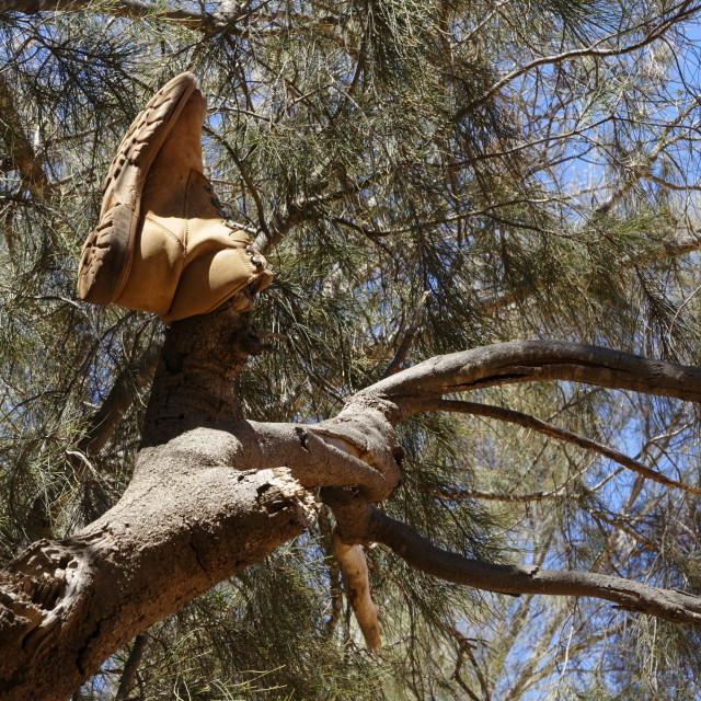 """Work boot in Eucalyptus tree"" stock image"