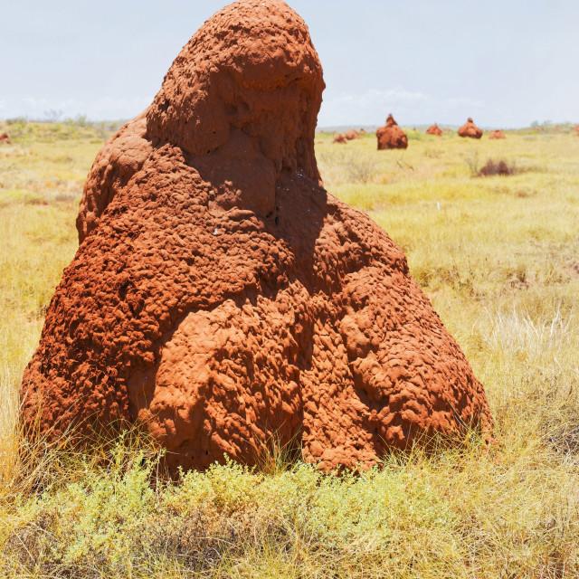 """Spinifex Termite Nest"" stock image"