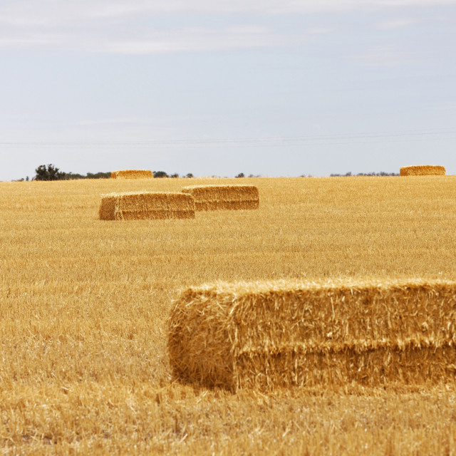 """""""Bales of hay in a field"""" stock image"""