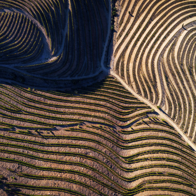 """Aerial view of the vineyards in the hills of the douro valley; Concept for travel in Portugal and in the Douro Valley, visit Portugal and most beautiful places in Portugal"" stock image"