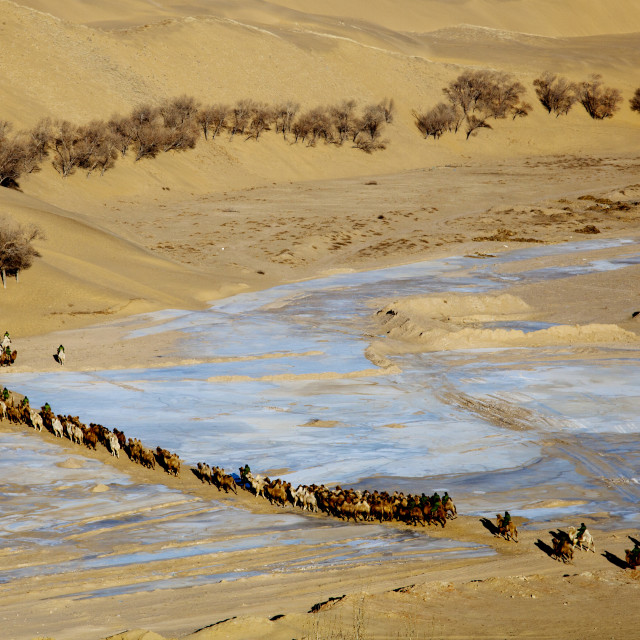 """A camel herd crosses the Yellow River"" stock image"