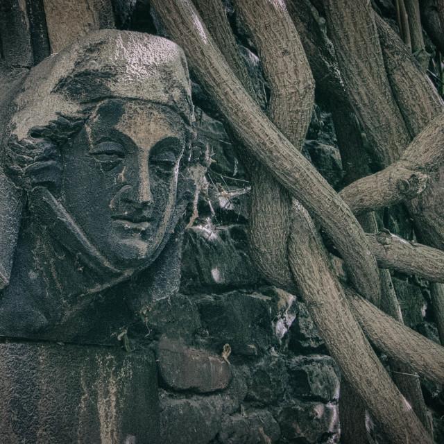 """""""Gargoyle with vines"""" stock image"""