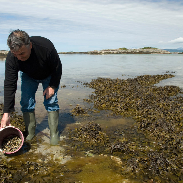 """Cockle picker, Arisaig, Scotland"" stock image"