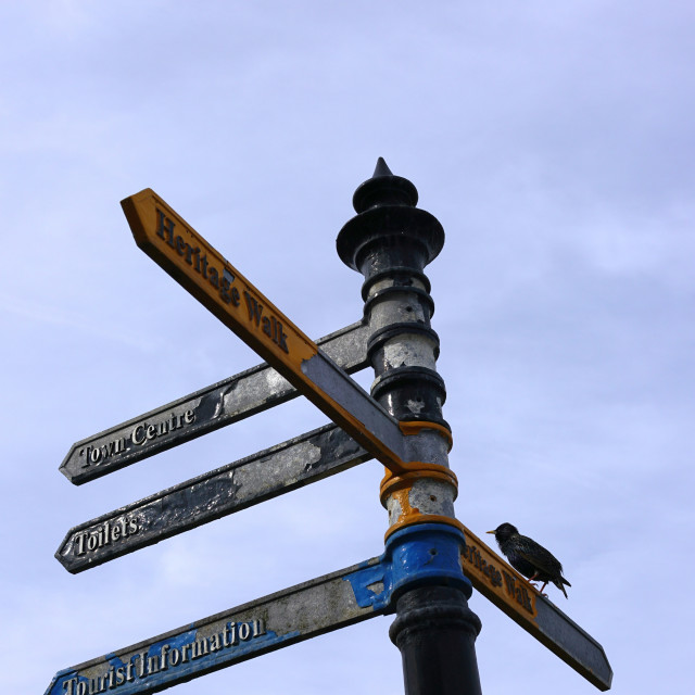 """""""Finger Post with starling, Seahouses, Northumberland"""" stock image"""