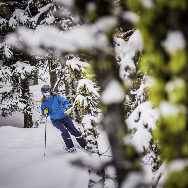 """Skier girl in Lake Louise trees"" stock image"
