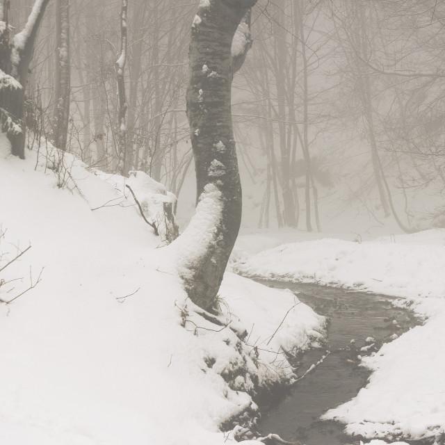 """Snowy stream"" stock image"