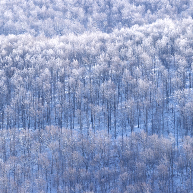 """""""Mountain forest"""" stock image"""
