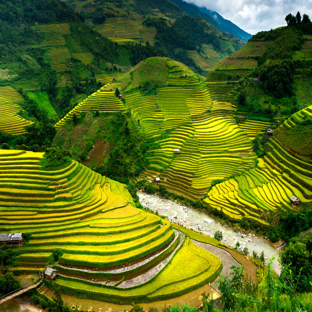 """Rice Fields on the Mountains"" stock image"