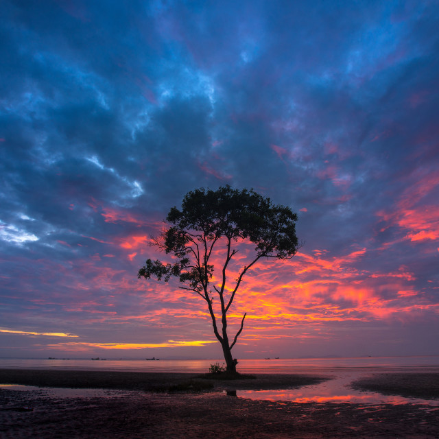 """Lone tree at sunrise storm"" stock image"