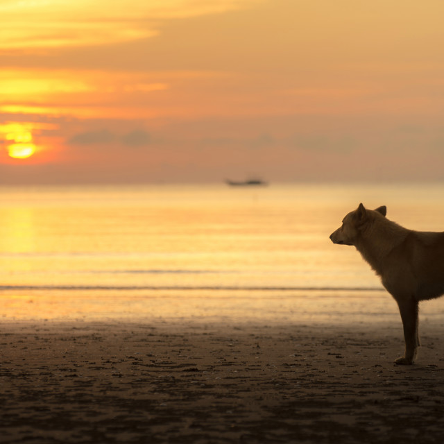 """dog looking at sunrise"" stock image"