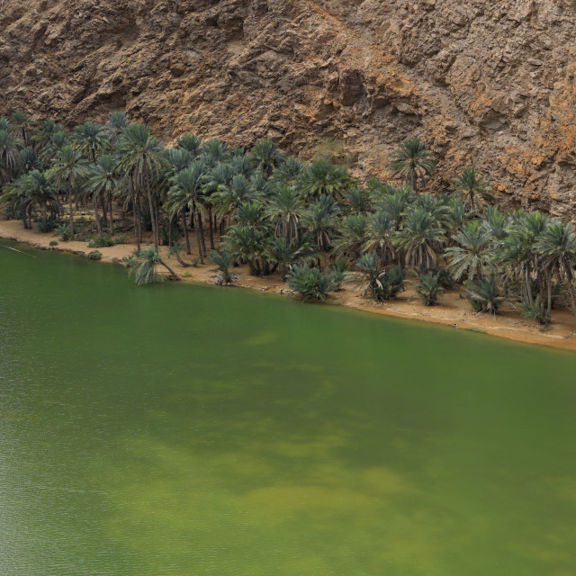 """""""View Of River And Palm Trees In Wadi Shab, Oman"""" stock image"""