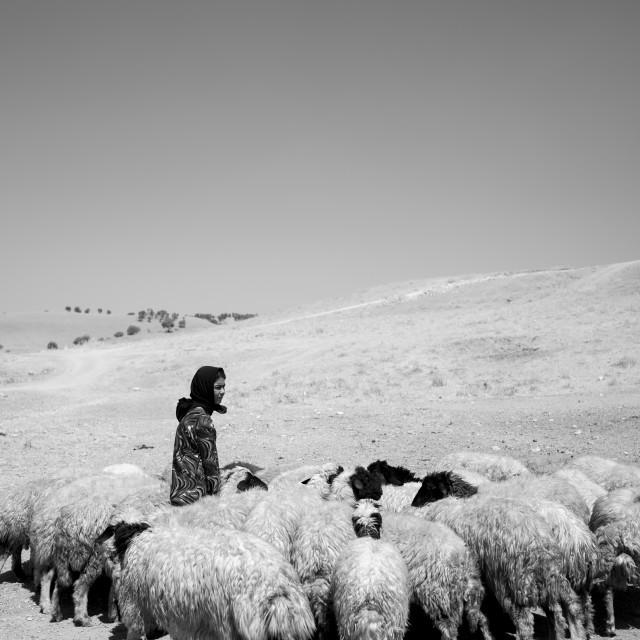 """Kurdish Sheperd, Azaban, Kurdistan, Iraq"" stock image"