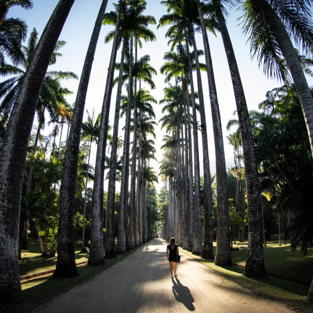 """""""Botanical Garden of Rio de Janeiro, Brazil"""" stock image"""