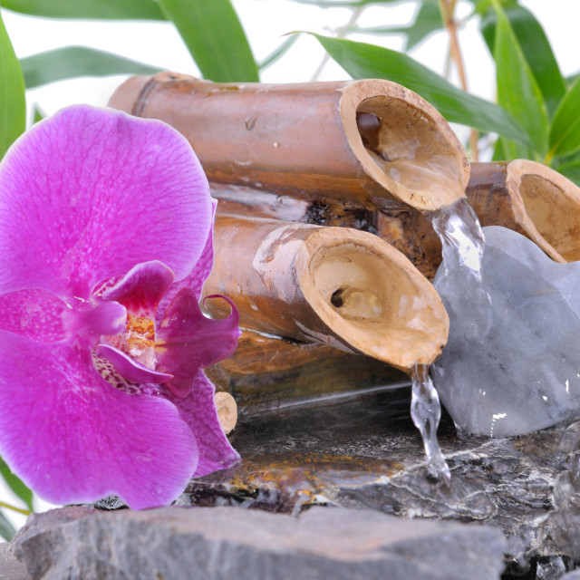"""""""orchid and heart-shaped pebble on a fountain"""" stock image"""