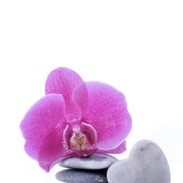 """""""romantic orchid and pebbles"""" stock image"""