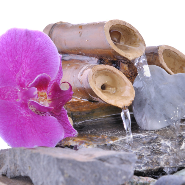 """""""orchid and heart on a small fountain"""" stock image"""