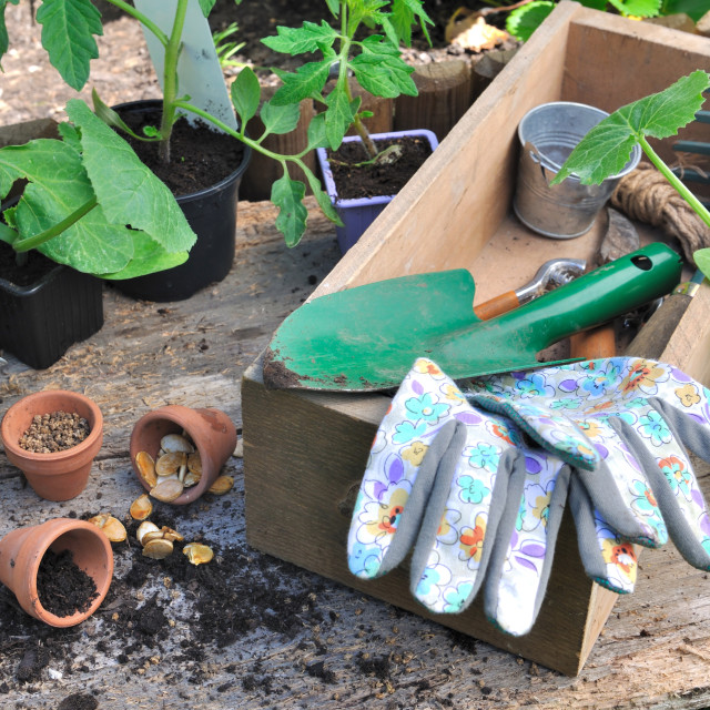 """""""gardening tools in a box"""" stock image"""