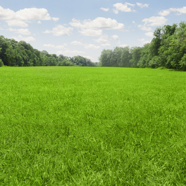 """""""USA, Connecticut, Kent, green meadow"""" stock image"""