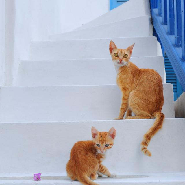 """Cat family Mykonos"" stock image"