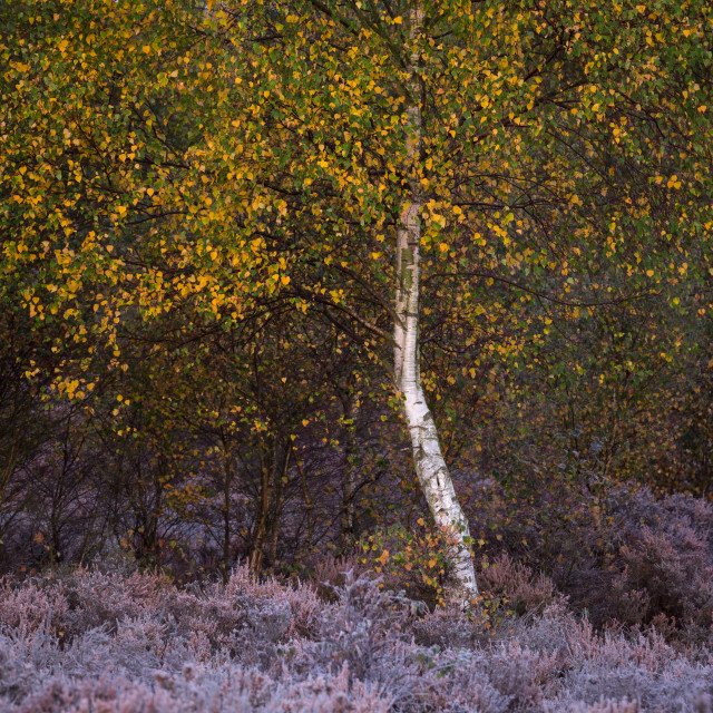 """First frost of the year in mid Autumn at Sherwood"" stock image"