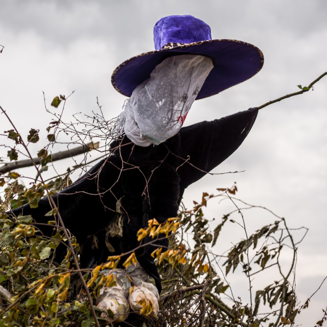 """""""A witch in big hat on the bonfire witch in big hat on the bonfir"""" stock image"""