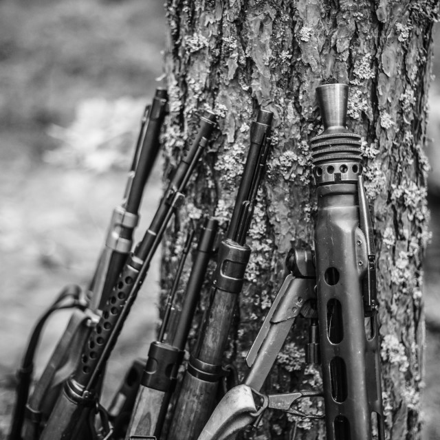 """""""Soviet And German Rifles Of World War Ii Machine-gun Leaning Against Trunk Of..."""" stock image"""