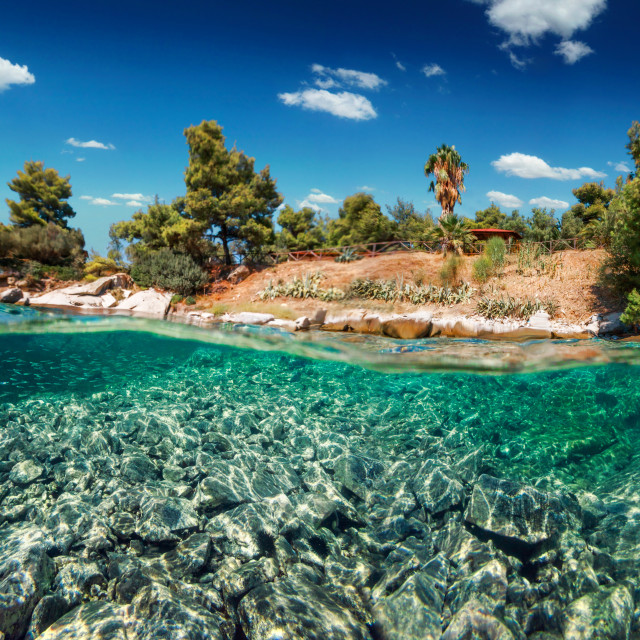 """Split Level Shallow Reef And Trees"" stock image"