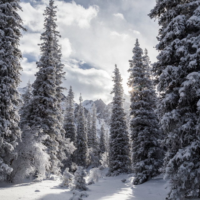 """Winter scene and forest in Ala Archa National Park, Kyrgyzstan"" stock image"