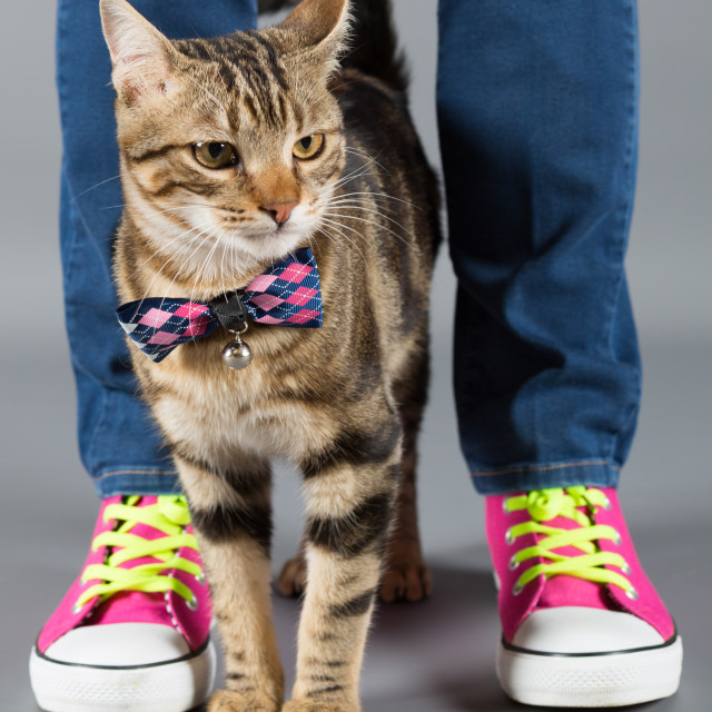 """Little cat with its owner"" stock image"