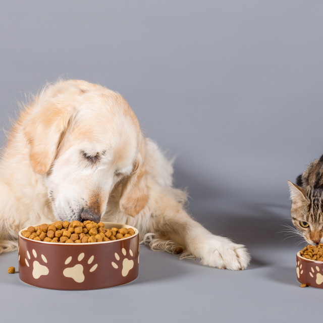 """""""Dog and cat eating"""" stock image"""