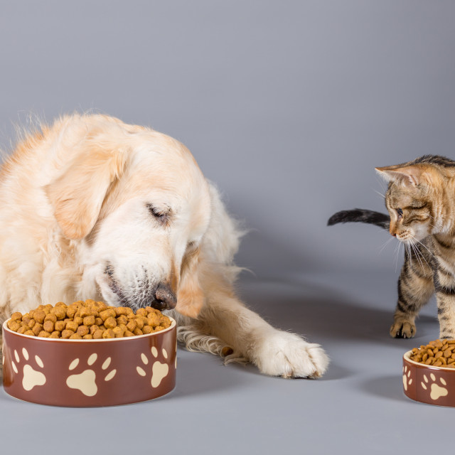 """Dog and cat eating"" stock image"