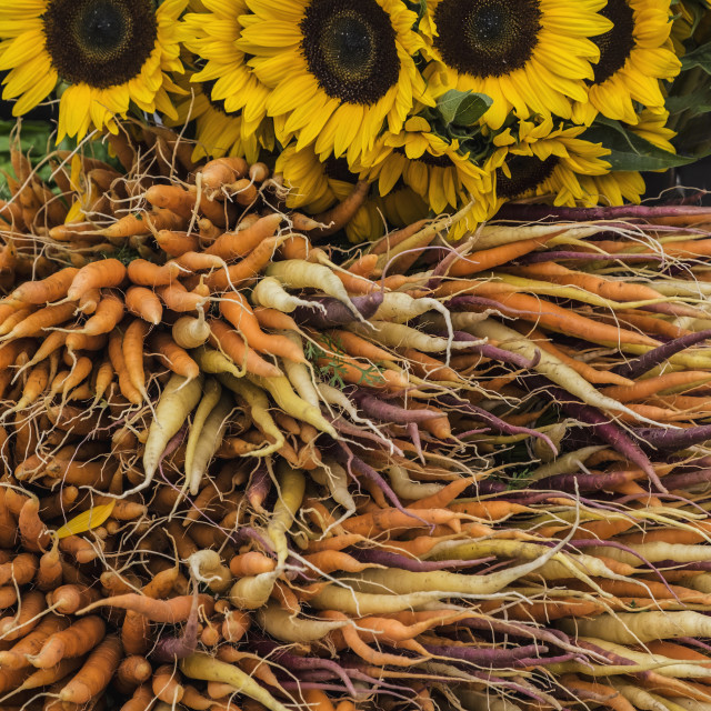 """Carrots and sunflowers in farmers market"" stock image"