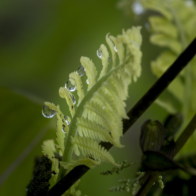 """""""Early Morning Dew"""" stock image"""