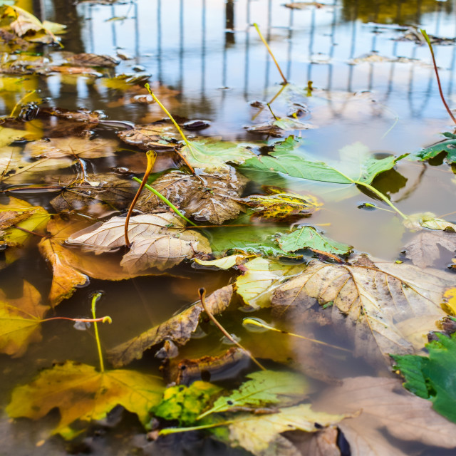 """""""Autumn Fall In A Puddle"""" stock image"""