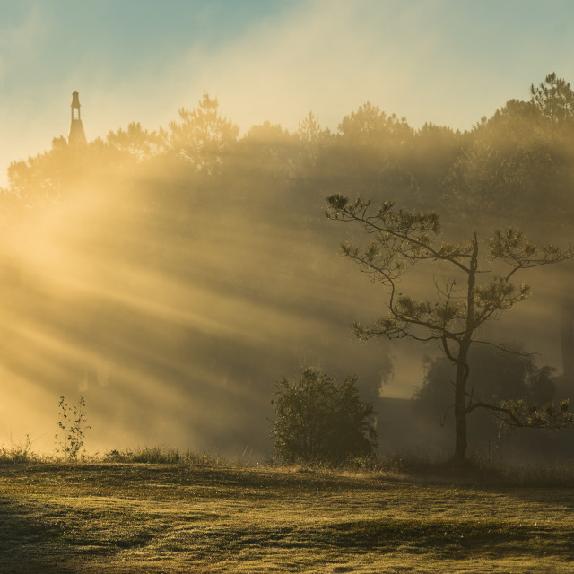 """Morning on a pinehill"" stock image"