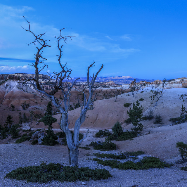 """""""The Blue Hour at Bryce Canyon"""" stock image"""