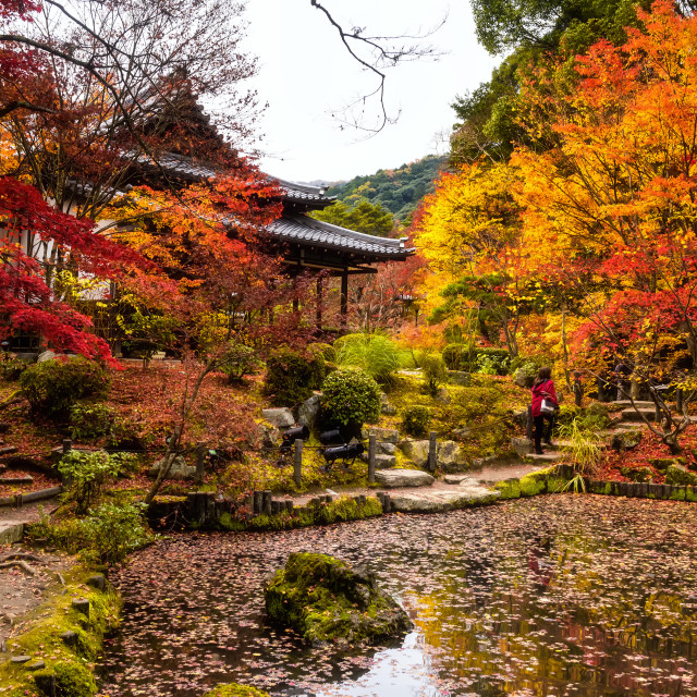 """Autumn colors at Tenjuan Temple, Kyoto"" stock image"