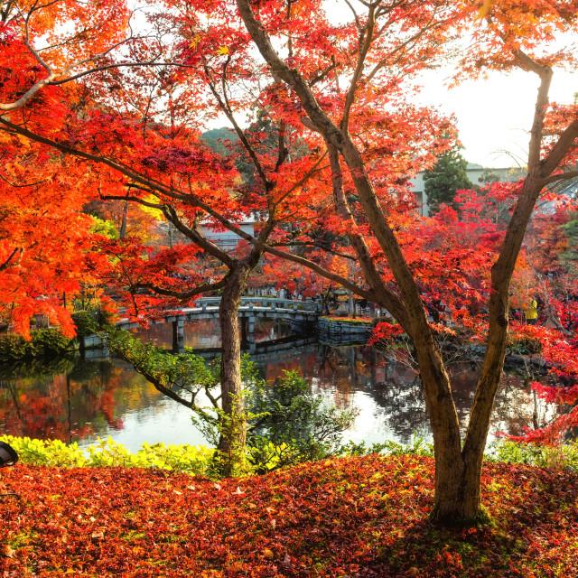 """""""Autumn garden at Eikando temple, Kyoto"""" stock image"""