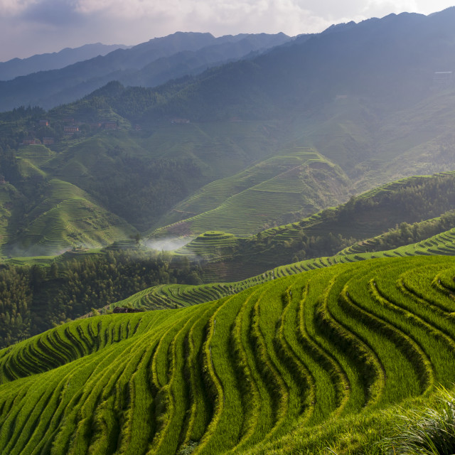 """Beautiful view of the Longsheng Rice Terraces near the of the Dazhai village in the province of Guangxi, China; Concept for travel in China"" stock image"